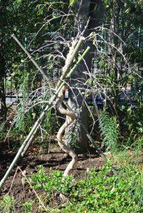 施設設立20周年を記念し、植樹を行いました。